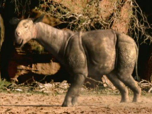 Walking with Prehistoric Beasts, Episode 3