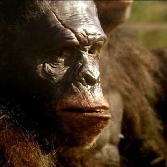 Walking With Cavemen : First Ancestors