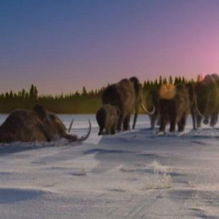 Walking with Prehistoric Beasts : Mammoth Journey