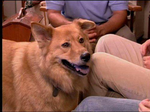 Dog Whisperer: Buddy and Stewart