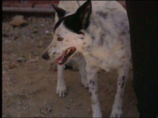 Dog Whisperer: Boyfriend and Alfie