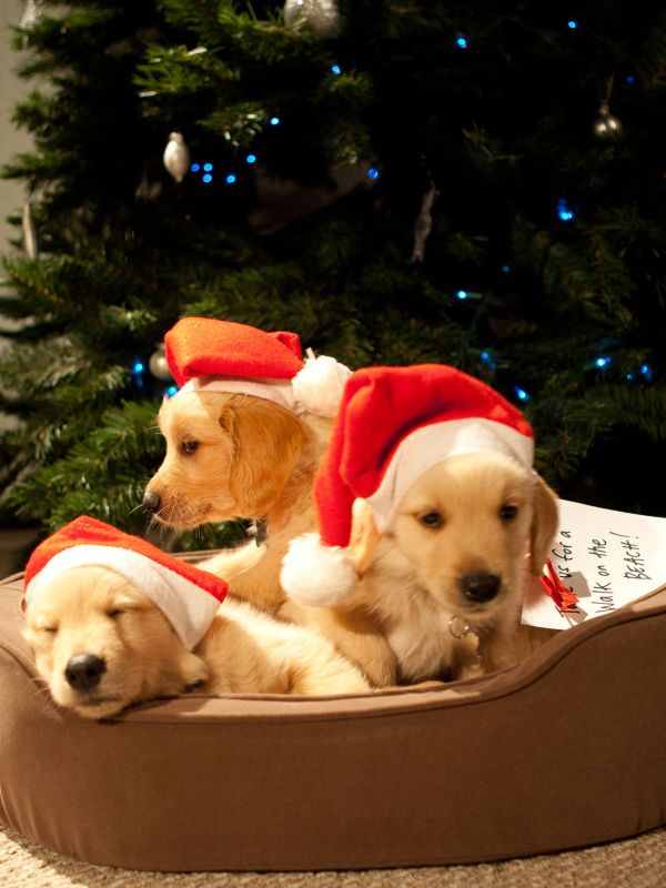 photo gallery - A Golden Christmas 2