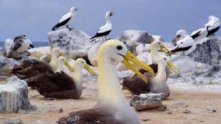 Galapagos 3D: Adaptation