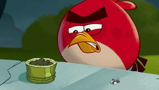 Angry Birds Toons: Cordon Bleugh