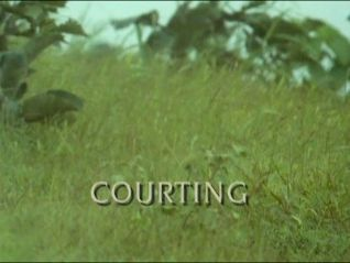 Trials of Life: Courting