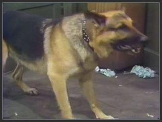 Barney Miller: Dog Days