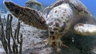 Nature: The Reptiles - Turtles & Tortoises