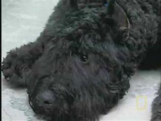 Dog Whisperer: Gus and Ava