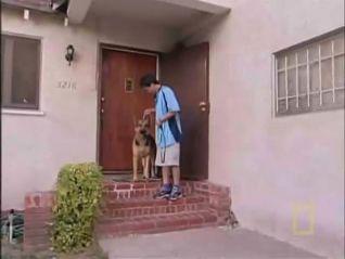 Dog Whisperer: Pepsi and Goldie