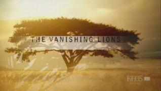 Nature: Vanishing Lions