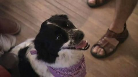 Dog Whisperer : Maya, Sara and Lilly