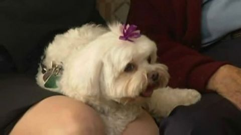 Dog Whisperer : Bodhi, Maggie & Molly, and Bojo
