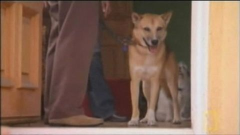 Dog Whisperer : Marley and Piper