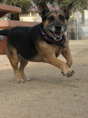 Dog Whisperer : Sasha and Angler