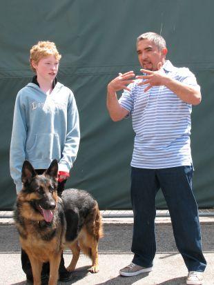 Dog Whisperer : Zena, Make-a-Wish, and Willie