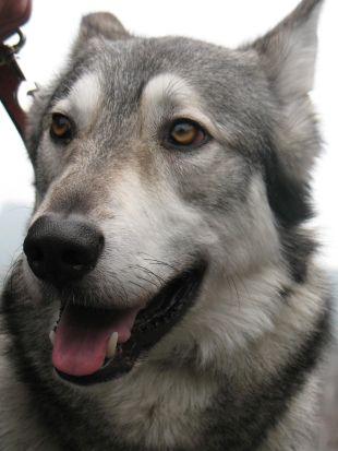 Dog Whisperer : Shadow, Jake & Riley and Norton