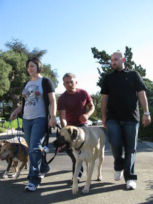Dog Whisperer : Dasher, Riley and Fosse