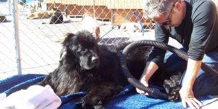 Dog Whisperer: Greta & Hoss, Storm, and Chula