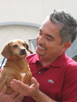 Dog Whisperer : Hope, Chloe and Sam