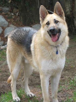 Dog Whisperer : Troy and Roxy