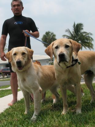 Dog Whisperer : ATF K-9 Gavin