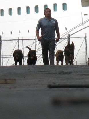 Dog Whisperer : Luna and the K9 Sniffers