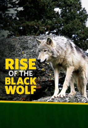 National Geographic: The Rise of the Black Wolf
