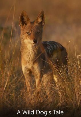 A Wild Dog's Tale