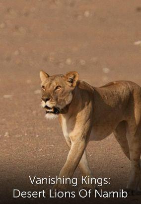 Vanishing Kings: Lions of the Namib