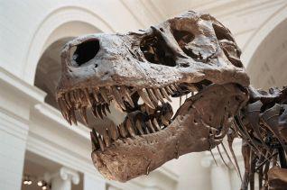 When Dinosaurs Ruled [TV Documentary Series]
