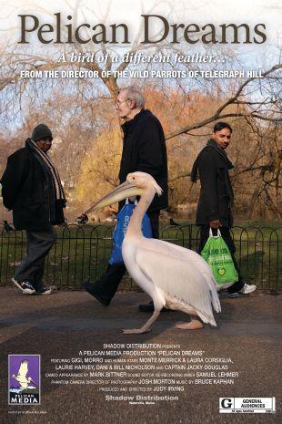 Pelican Dreams