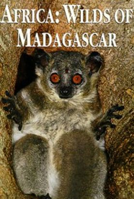 National Geographic: Africa - Wilds of Madagascar