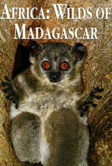 Wilds of Madagascar