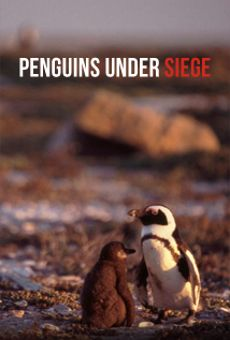 Penguins Under Siege