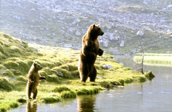 The Bear 1988 - Jean-Jacques Annaud  Synopsis -5960