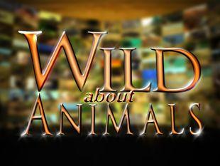 Wild About Animals [TV Series]