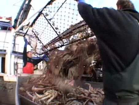 Deadliest Catch : On the Crab