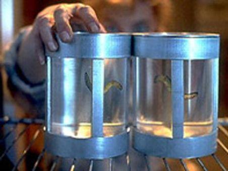 The X-Files : Ice