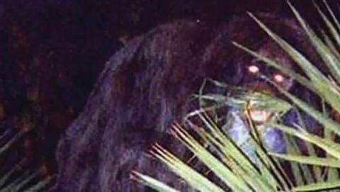 MonsterQuest : Swamp Beast