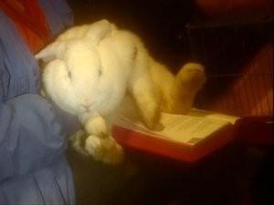 The Vicar of Dibley: Animals