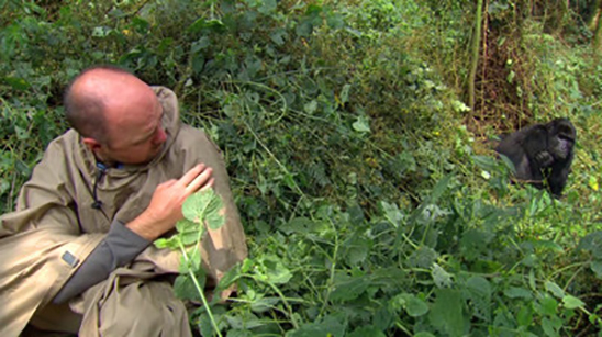 An Idiot Abroad: The Bucket List: Meet a Gorilla