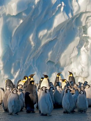 Frozen Planet: Winter