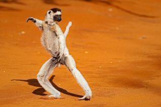 Madagascar: Island of Marvels