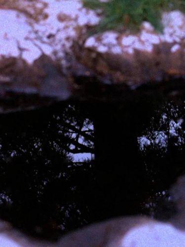 Twin Peaks : Miss Twin Peaks