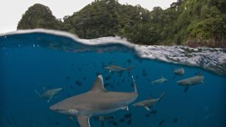 National Geographic: Shark Island