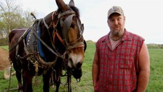 Only in America With Larry the Cable Guy: Larry Breeds Mules