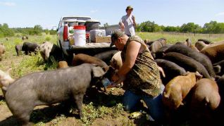 Only in America With Larry the Cable Guy: Larry and the Superpig