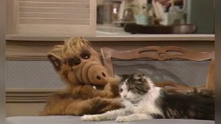 ALF: Looking For Lucky
