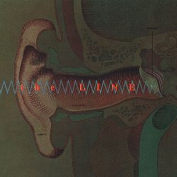 The Line - Auricle