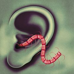 Castlemania Thee Oh Sees Songs Reviews Credits >> An Odd Entrances Thee Oh Sees Songs Reviews Credits Allmusic